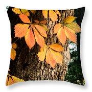 Virginia Creeper Autumn Color Throw Pillow