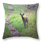 Virginia - Shenandoah National Park - White Tailed Deer Throw Pillow