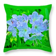 Virginia Waterleaf Near Alamo-michigan Throw Pillow