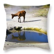 Visitor At West Thumb Basin Throw Pillow
