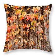 Vitaceae Family Ivy Wall Abstract Throw Pillow