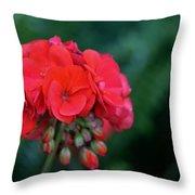 Vividly Red Geranium Throw Pillow