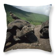 Volcan Alcedo Giant Tortoise Throw Pillow
