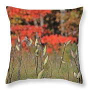 Wachusett Meadows 4 Throw Pillow