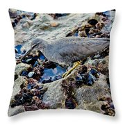 Wadering Tattler At Low Tide Throw Pillow
