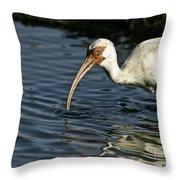 Wading Ibis Throw Pillow