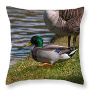 Wadlding To The Water Throw Pillow
