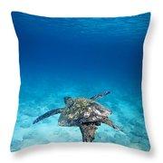 Turtle Soar Throw Pillow