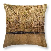 Wait Patiently - Alligator Throw Pillow