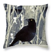 Waiting Grackle Throw Pillow
