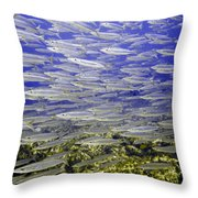 Wall Of Silver Fish Throw Pillow