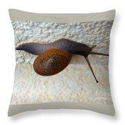 Wall Snail 2 Throw Pillow
