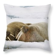 Walrus Male And Female On Ice Floe Throw Pillow