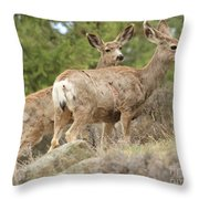 Wandering In The Rockies Throw Pillow
