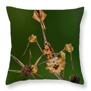 Wandering Violin Mantis Throw Pillow