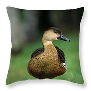 Wandering Whistling Duck Throw Pillow
