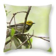 Warbler - Black-throated Green  Throw Pillow