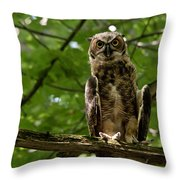 Warm Young Great Horned Owl Throw Pillow