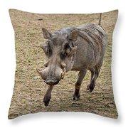 Warthog Approach Throw Pillow