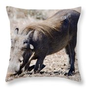 Warthog Digging Throw Pillow