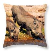 Warthog Family Throw Pillow