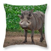 Warthog Stance Throw Pillow