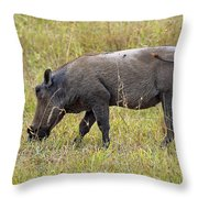 Warthog Throw Pillow