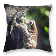 Warty Tree Frog Throw Pillow