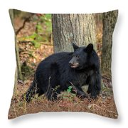 Wary Black Bear Throw Pillow