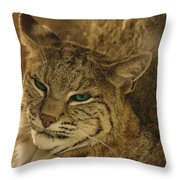 Wary Bobcat Throw Pillow by Penny Lisowski