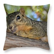 Wary Squirrel Throw Pillow
