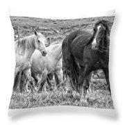 Wary Stallion Throw Pillow