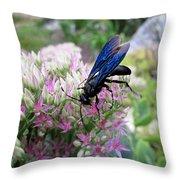 Wasp On Sedum Throw Pillow