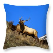 Watchful Bull Throw Pillow