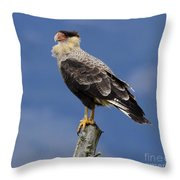 Watchful Eyes Crested Southern Caracara Throw Pillow