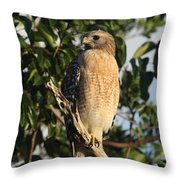 Watchful Eyes - Red Shouldered Hawk Throw Pillow