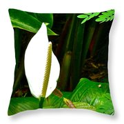 Water Arum In Park Across From Wat Phrathat Doi Suthep In Chiang Mai-thailand. Throw Pillow