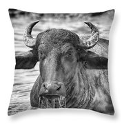 Water Buffalo-black And White Throw Pillow