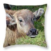 Water Buffalo Calf Throw Pillow