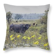 Water Buffaloes At Corroboree Billabong Throw Pillow