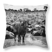 Water Buffaloes-black And White Throw Pillow