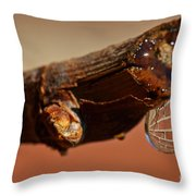 Water Drop On A Branch Throw Pillow