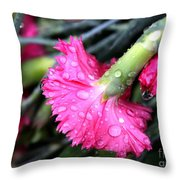 Water Droplets On Carnations Throw Pillow by Janice Byer