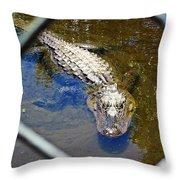 Water Hole Gator Throw Pillow