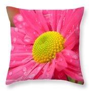 Water Kissed Pink Chrysanthemum 2 Throw Pillow