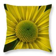Water Kissed Yellow Chrysanthemum  Throw Pillow