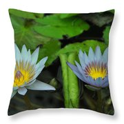 Water Lilies  1 Throw Pillow