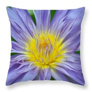 Water Lily 16 Throw Pillow