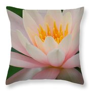Water Lily II - Close Up Throw Pillow