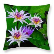 Water Lily IIi Throw Pillow